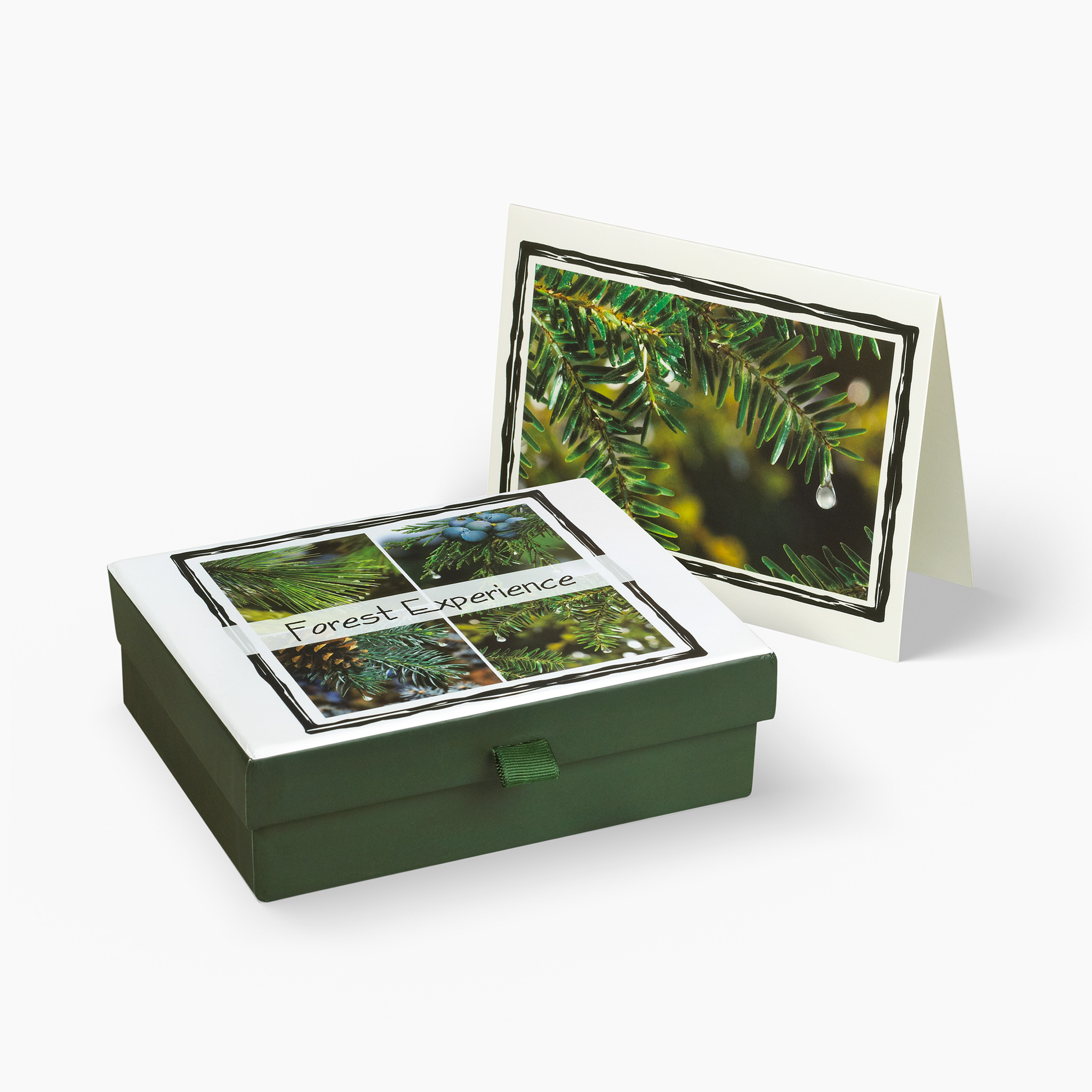 Nabila K's Forest Experience Card and Envelope Stationary with a box holding the cardss